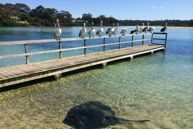 Private Eurobodalla Coastal Highlights Day Tour including lunch - Accommodation Batemans Bay