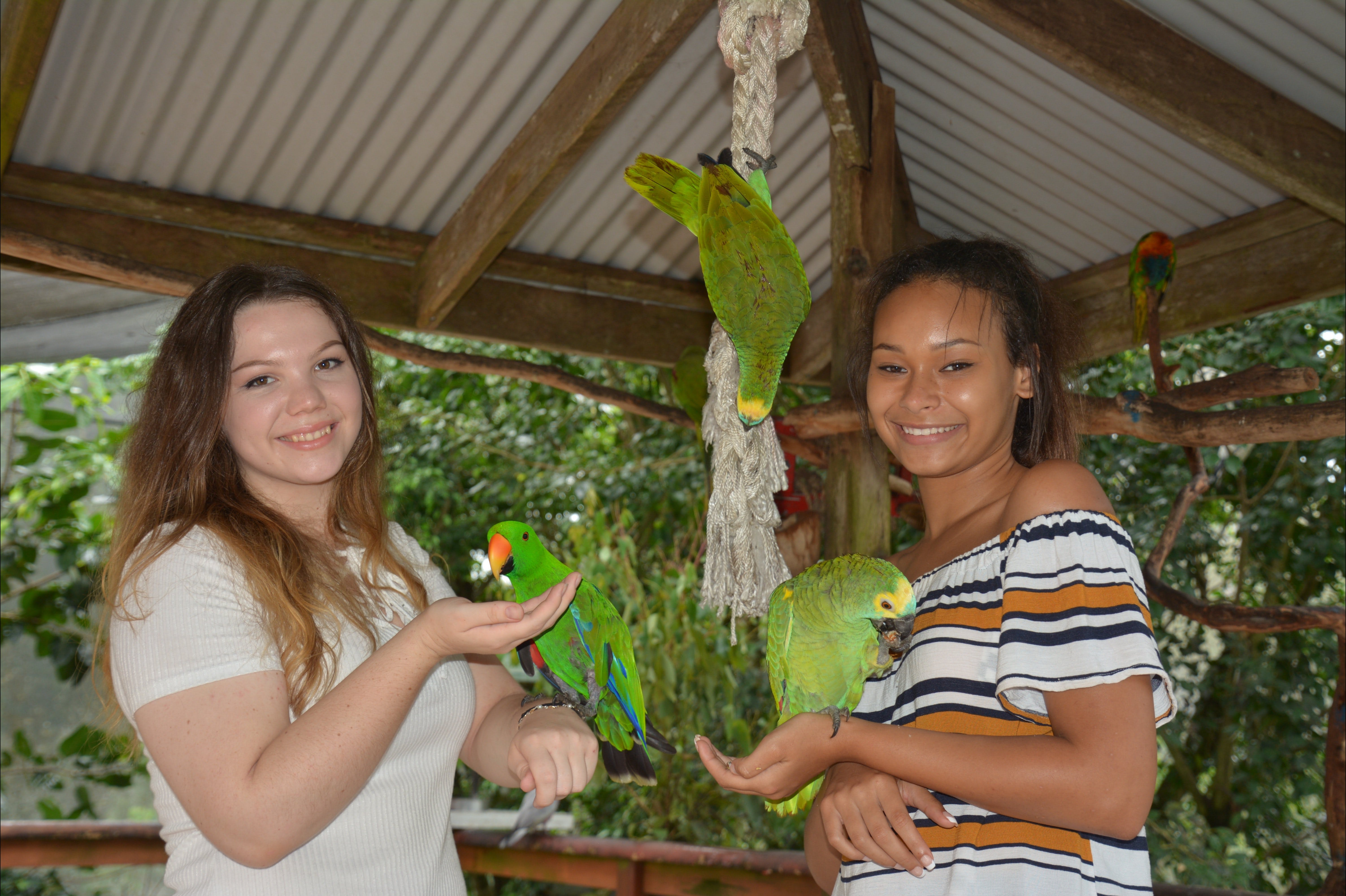 Birdworld Kuranda - Accommodation Batemans Bay