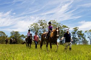 Port Macquarie Horse Riding Centre - Accommodation Batemans Bay