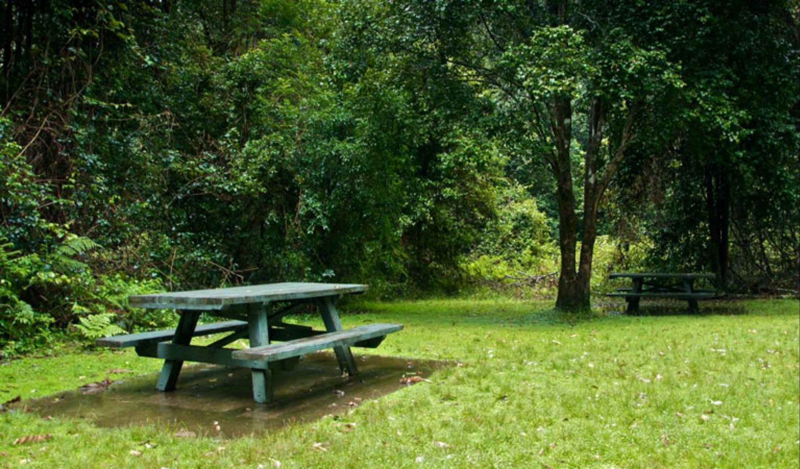 Williams River picnic area - Accommodation Batemans Bay