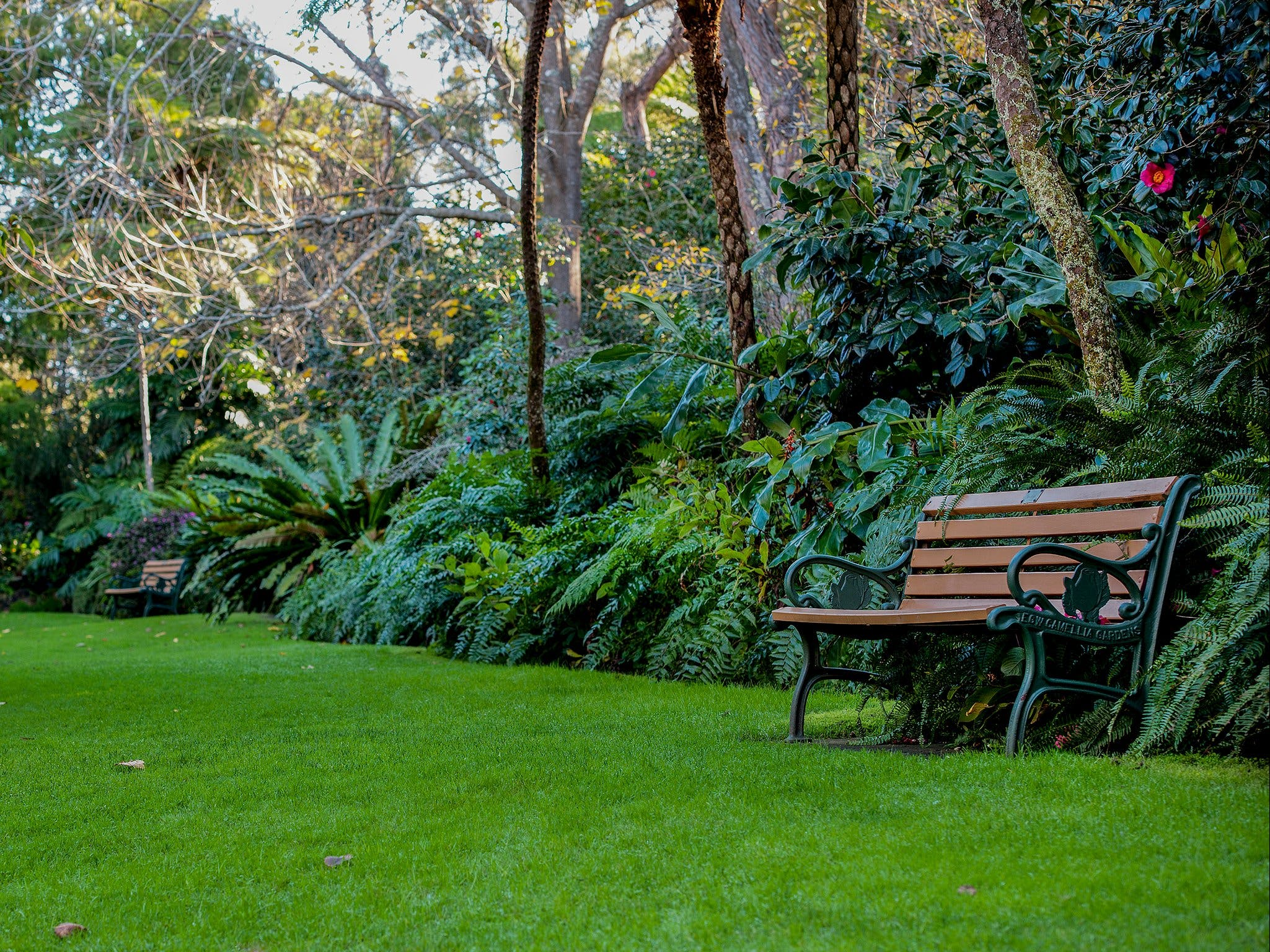 EG Waterhouse National Camellia Gardens - Accommodation Batemans Bay