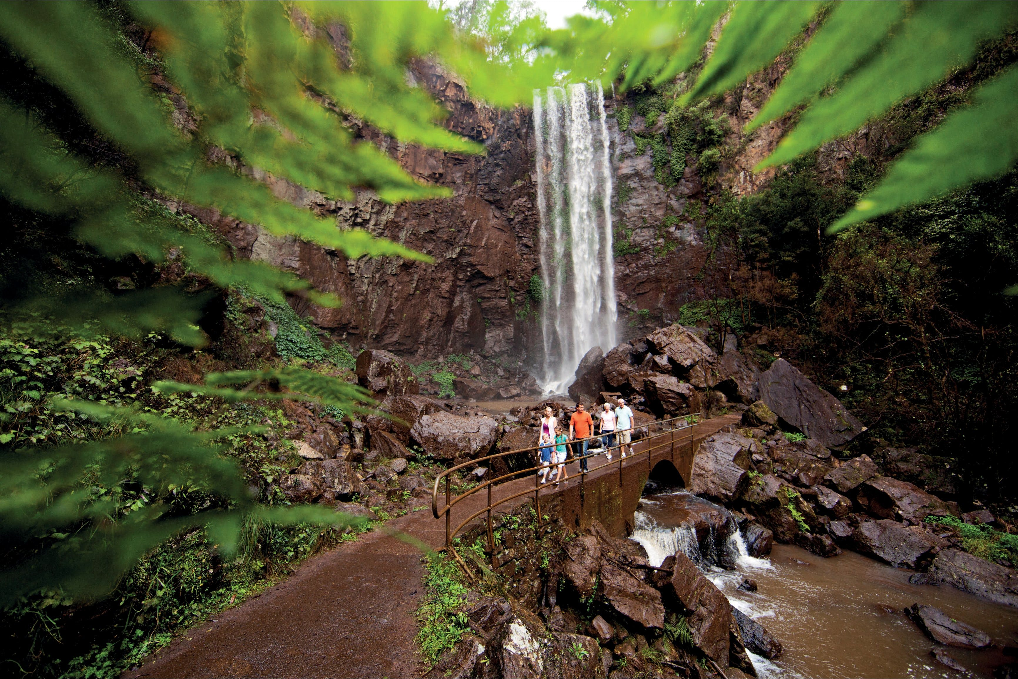Queen Mary Falls circuit Main Range National Park - Accommodation Batemans Bay