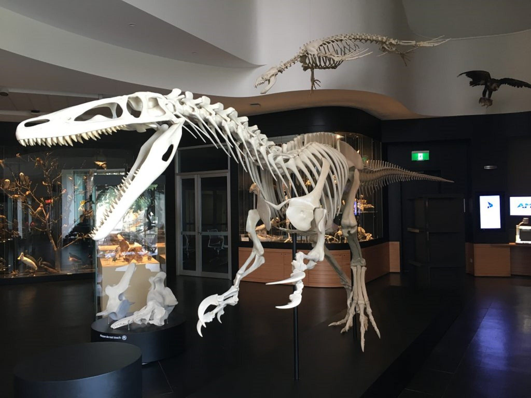 UNE Natural History Museum - Accommodation Batemans Bay