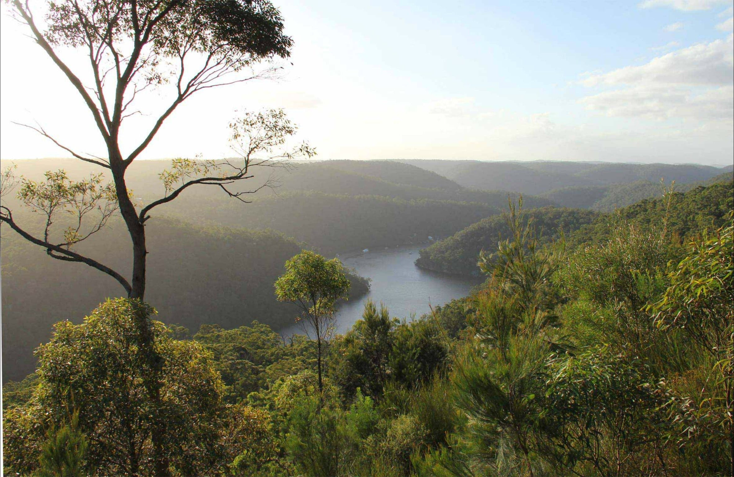 Great North walk - Berowra Valley National Park - Accommodation Batemans Bay