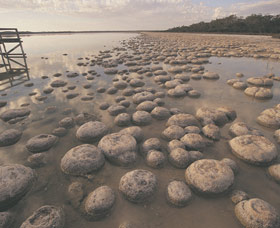 Lake Clifton Thrombolites - Accommodation Batemans Bay