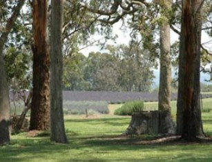 Aloomba Lavender - Accommodation Batemans Bay