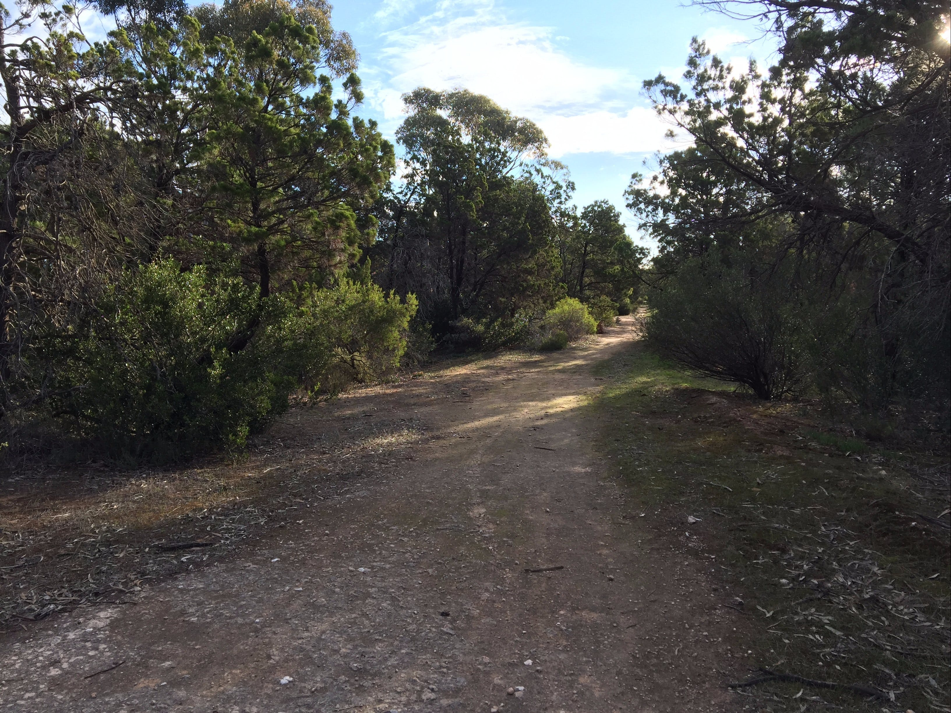 Victoria Park Moonta monthly walks - Accommodation Batemans Bay
