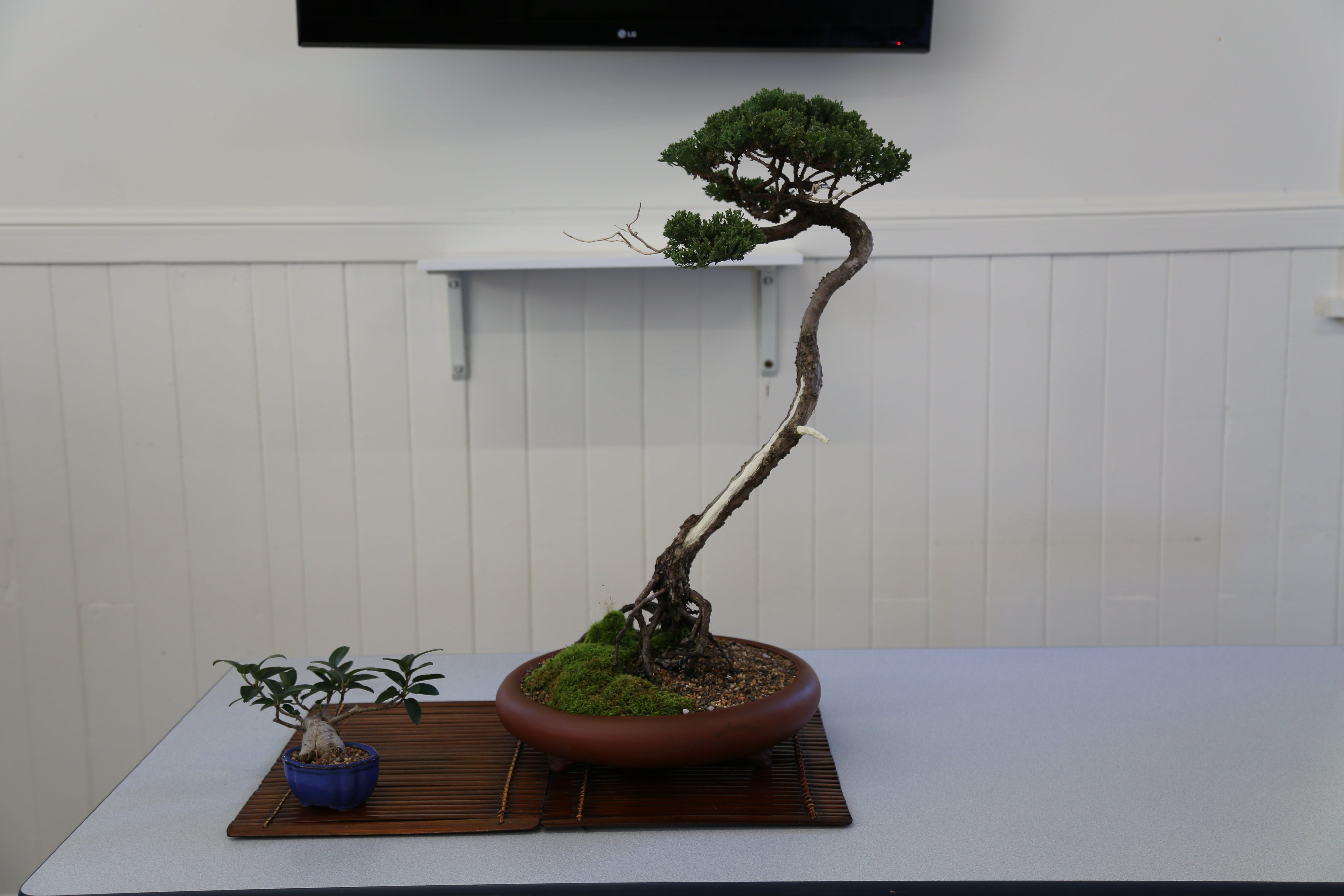 Wauchope Bonsai Workshop Group - Accommodation Batemans Bay