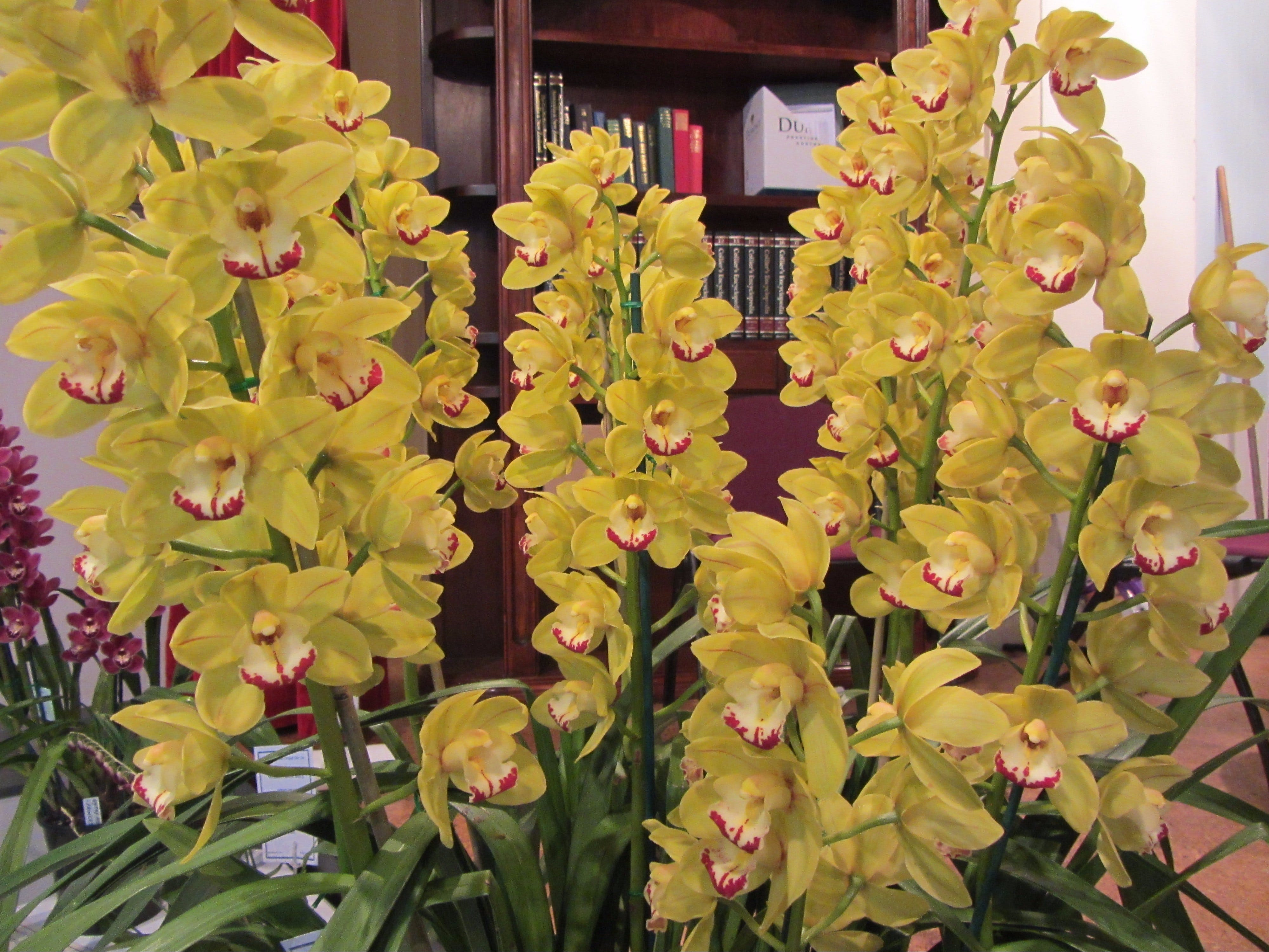 Sapphire Coast Orchid Club Winter Orchid Show - Accommodation Batemans Bay
