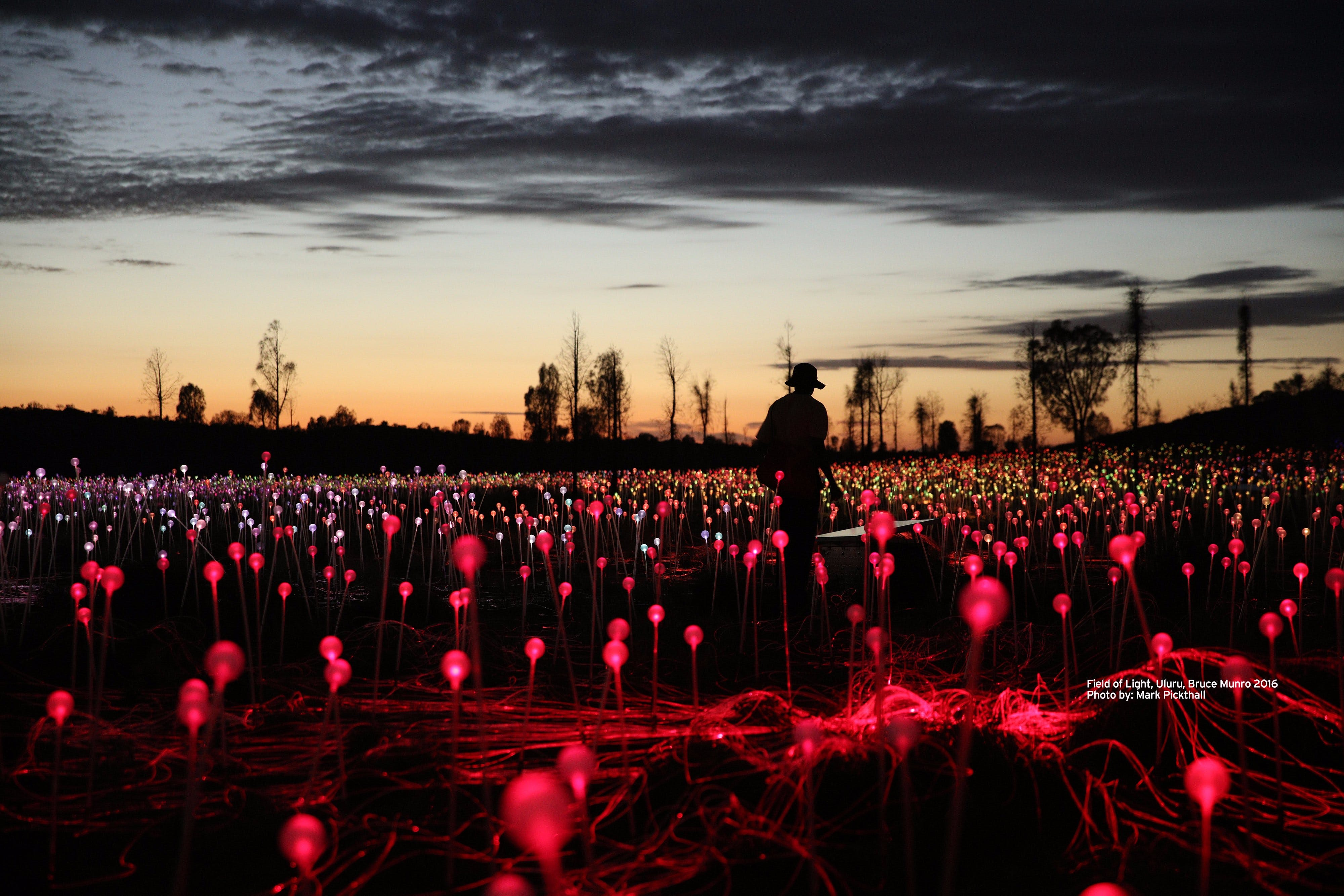 Field of Light Uluru - Accommodation Batemans Bay
