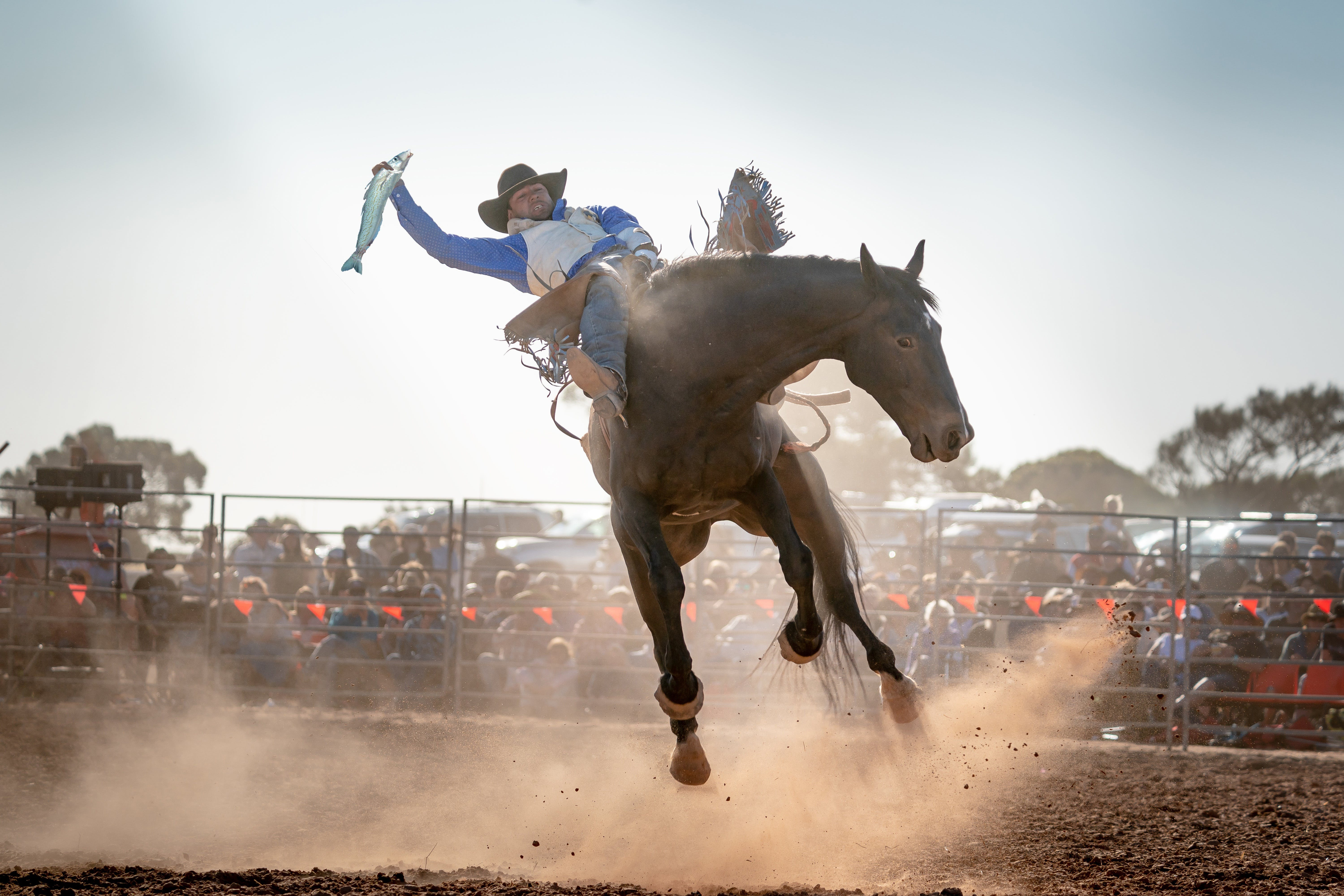 Rodeo by the Sea - Streaky Bay - Accommodation Batemans Bay
