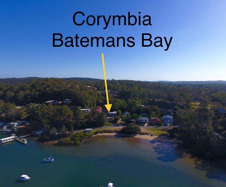 Corymbia Batemans Bay - Accommodation Batemans Bay